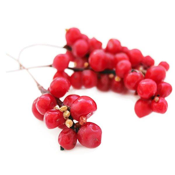 schisandra-berry-5139076