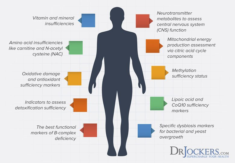 dr-jockers-organic-acid-test-infographic